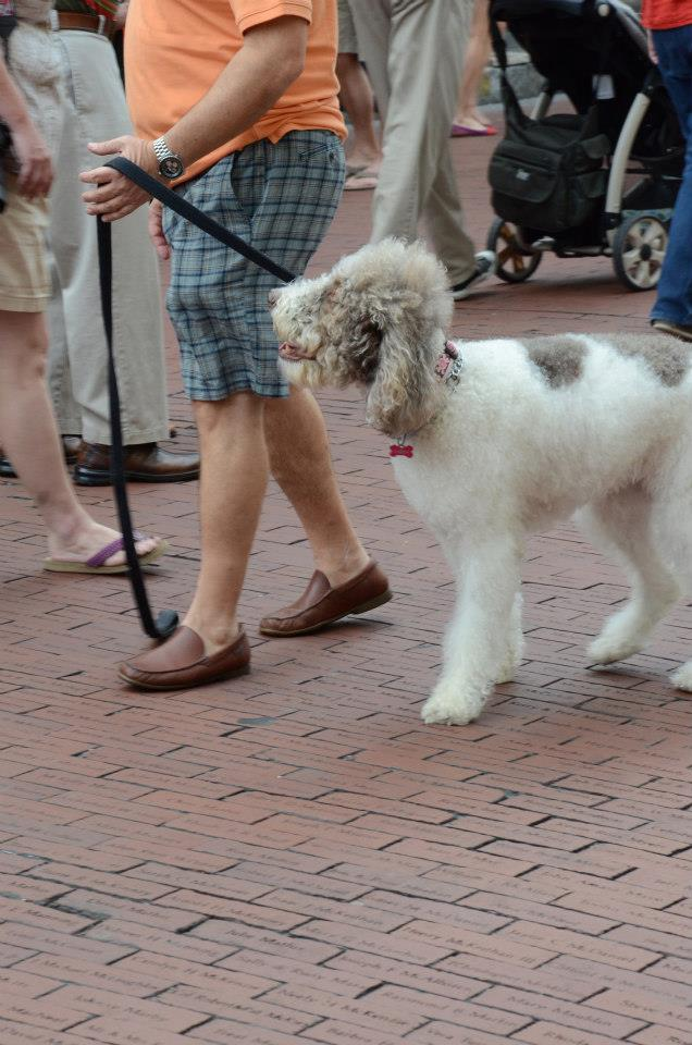 photo of dog on 2nd Sunday on King Street